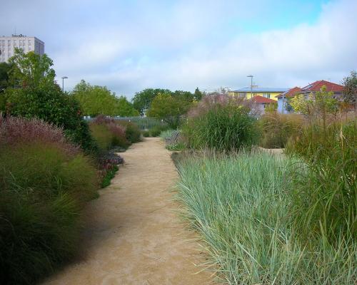Jardin de graminées 2